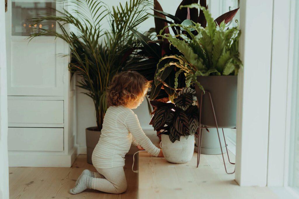 Pflanze Kinderzimmer
