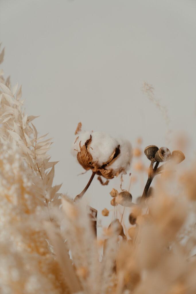 baumwolle bio